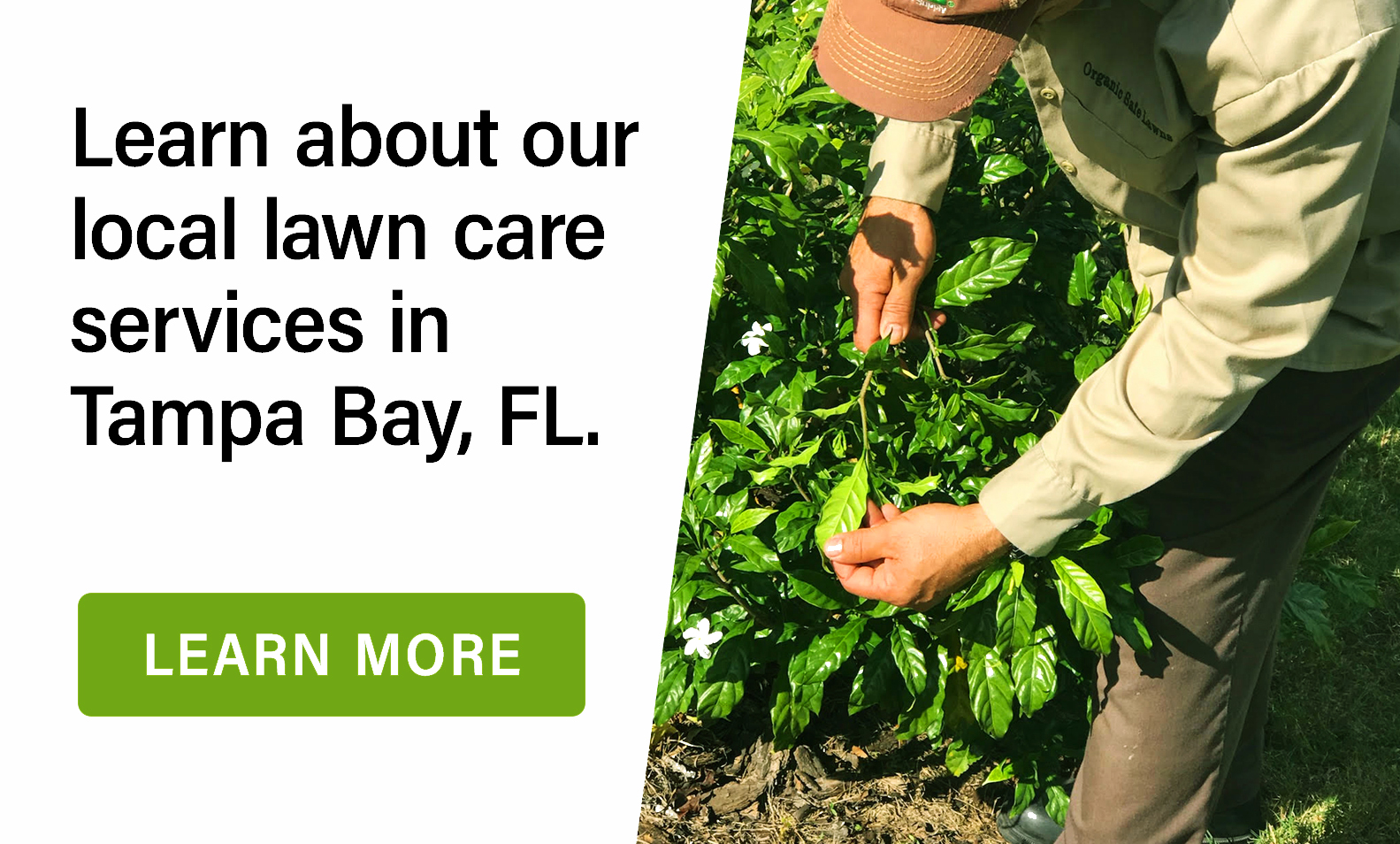 learn about our lawn care organic safe shoppes wesley chapel florida
